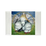 Owl Pigeons In Field Rectangle Magnet