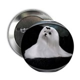 "Maltese Dog 2.25"" Button"