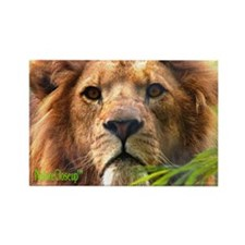 LION Rectangle Magnet (100 pack)