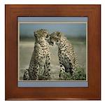 Cheetas 2 Framed Tile