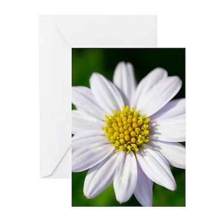 White Flower Greeting Cards (Pk of 10)