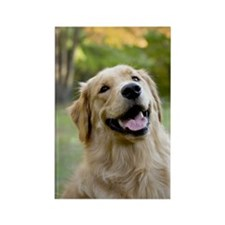 Good Boy Golden Rectangle Magnet (100 pack)