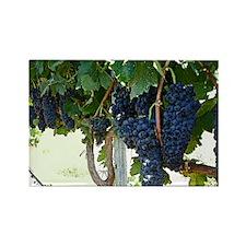 Grape Vine Rectangle Magnet