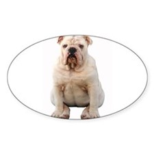 Bulldog 4 Oval Decal