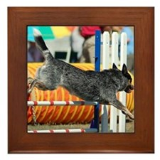 Australian Cattle Dog Framed Tile