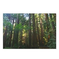 redwood trees Postcards (Package of 8)