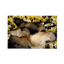 Sleeping Corgi Rectangle Magnet (100 pack)