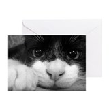 Black & White Cat Greeting Cards (Pk of 10)