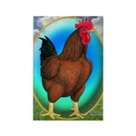 Broiler Opal Chicken Rectangle Magnet (10 pack)