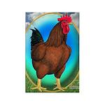 Broiler Opal Chicken Rectangle Magnet