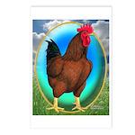 Broiler Opal Chicken Postcards (Package of 8)