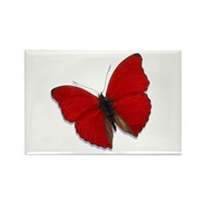 Red Glider Rectangle Magnet