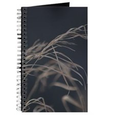 Winter Grass Journal