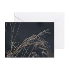 Winter Grass Greeting Cards (Pk of 10)