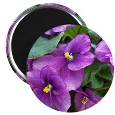 "Beautiful Purple AV Field 2.25"" Magnet (10 pack)"