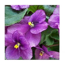 Beautiful Purple AV Field Tile Coaster