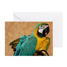 Blue and Gold Macaw Greeting Card