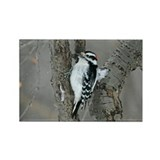 Male Downy Woodpecker Rectangle Magnet