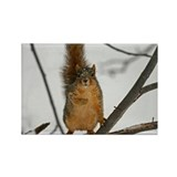 Standing Squirrel Rectangle Magnet