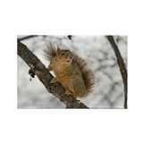 Adorable Squirrel Rectangle Magnet (10 pack)
