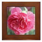 Pink Carnation Framed Tile