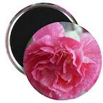 Pink Carnation Magnet