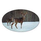 Buck & Doe Oval Decal