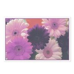 Perfect Purple Daisy Postcards (Package of 8)