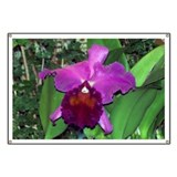 Deep Purple Orchid Banner