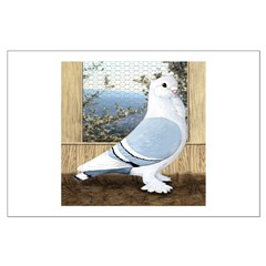 Satinette Pigeon In Loft Large Poster