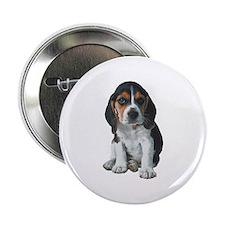 Beagle 2.25