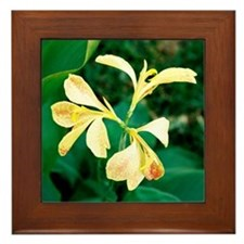 Cannas - Art / Photography Framed Tile