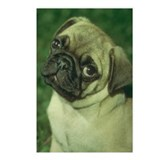 Pug Dog Postcards (Package of 8)