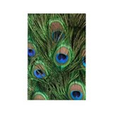 Peacock Feathers Rectangle Magnet