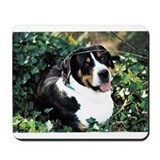 Cool Swiss mountain dog Mousepad