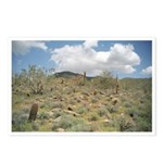 Cactus Pastoral Postcards (Package of 8)