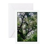 Moss Canopy Greeting Cards (Pk of 10)