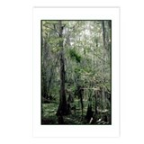 Swamp Serenity Postcards (Package of 8)