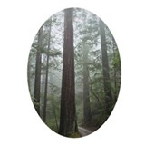 Redwood Forest Fog Oval Ornament