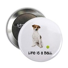 Jack Russell Terrier Life 2.25