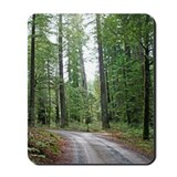 Through the Redwood Forest Mousepad