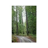 Through the Redwood Forest Magnet (10 pack)
