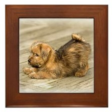 Playful Norfolk Terrier Pup Framed Tile