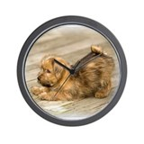 Playful Norfolk Terrier Pup Wall Clock