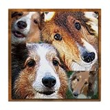 Glendale Shelties Tile Coaster