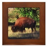 Buffalo - Framed Tile