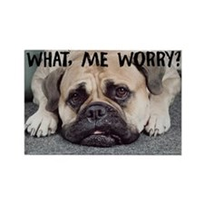 Worried Bullmastiff Rectangle Magnet