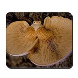 Mushroom 8220 Mousepad