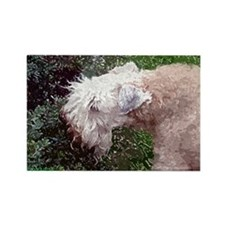 Wheaten Terrier Rectangle Magnet (10 pack)