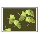 Ginkgo Leaves Banner